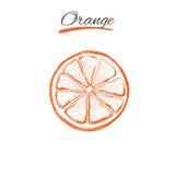 Apelsin Vektorn räcker utdraget Naturliga örter och blommor Skönhet och Ayurveda organiska skönhetsmedel royaltyfri illustrationer