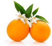 Apelsinen bär frukt med blomningen Royaltyfri Foto
