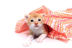 Apelsinen behandla som ett barn kattungen Royaltyfria Foton