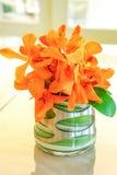 Apelsinen blommar i en glass vas Royaltyfri Bild