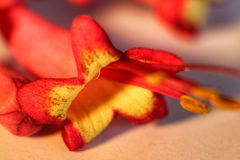 Apelsinen blommar litet Royaltyfria Bilder