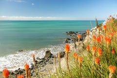 Apelsinen blommar vid havet Arkivbilder