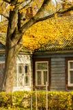 Apelsinen färgar trädblad på det gamla hustaket i authumntid Royaltyfria Foton