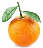 Apelsinen med lämnar på en vitbakgrund Arkivfoto