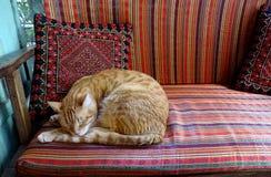 Apelsinen och den vit gjorde randig katten är avslappnande på en röd mönstrad soffa royaltyfri fotografi