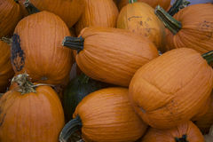 Apelsinen och Freshcut pumpor för gräsplan travde högt i regnigt, Muddy Rural Pumpkin Patch Royaltyfria Bilder