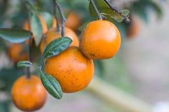 Apelsinen parkerar Arkivfoton
