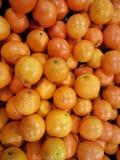 Apelsiner överhopar på busket arkivbilder