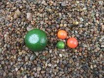 Apelsiner i miniatyr Arkivbild