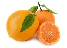 Apelsiner med sidor på vit bakgrund Arkivfoto