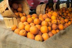 Apelsiner som är till salu på en bondes marknad Royaltyfri Foto