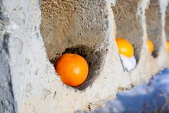 Apelsiner som ligger i konkreta hål, abstraktion arkivfoton