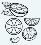 Apelsinfrukter och skivor Royaltyfri Fotografi