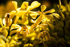 Apelsinorkidé som är härlig i trädgård, thailändsk orkidé Fotografering för Bildbyråer
