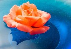 Apelsinrosblomma som svävar på blått vatten i en glass bunke Royaltyfri Foto
