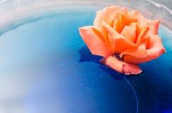 Apelsinrosblomma som svävar på blått vatten i en glass bunke Royaltyfri Fotografi