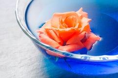 Apelsinrosblomma som svävar på blått vatten i en glass bunke Fotografering för Bildbyråer