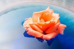 Apelsinrosblomma som svävar på blått vatten i en glass bunke Arkivbilder