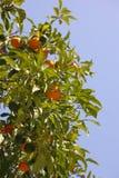 apelsinsky Royaltyfria Foton