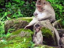 apen Stock Foto's