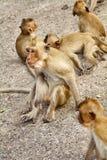 apen Stock Foto