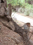 apen Stock Fotografie