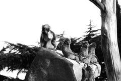 Apen, bavianen heel wat families dierlijke ACHTERGROND stock foto's
