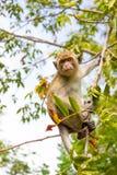 Apen in een boom Royalty-vrije Stock Foto's