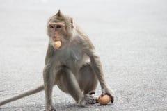 Apen het eten Stock Afbeelding