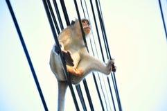 Apen in Lopburi, Thailand Stock Foto