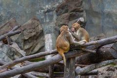 Apen op boom Aapportret Stock Afbeeldingen