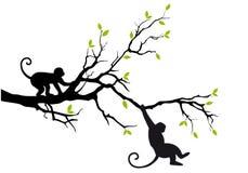 Apen op boom, vector royalty-vrije illustratie