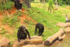 Apen op de boom in aard bij de dierentuin Stock Foto's