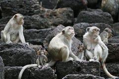 Apen op de tempel Royalty-vrije Stock Afbeeldingen