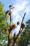 Apen op een boom Stock Afbeelding