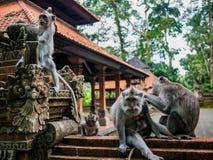 Apen op een tempelmuur met babys het spelen Royalty-vrije Stock Foto