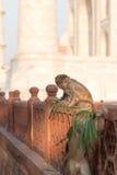 Apen in Taj Mahal Royalty-vrije Stock Fotografie