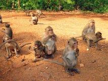 Apen in Thailand Royalty-vrije Stock Foto's