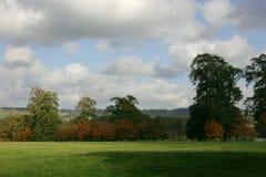 Apenas árboles, cielo e hierba Imagen de archivo libre de regalías
