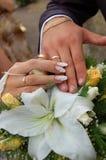Apenas casado. Mãos. Casamento. imagem de stock royalty free