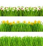 Apenas chovido sobre A grama verde com água deixa cair a bandeira floral fotos de stock