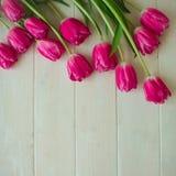 Apenas chovido sobre Tulipa cor-de-rosa no fundo de madeira branco Fotos de Stock