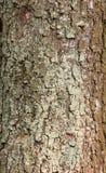 Apenas corteza en un árbol Foto de archivo
