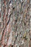 Apenas corteza en un árbol Fotografía de archivo libre de regalías