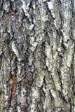Apenas corteza en un árbol Fotos de archivo libres de regalías