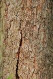 Apenas corteza en un árbol Foto de archivo libre de regalías