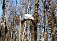 Apenas corteza en un árbol Superficie estructural hermosa de la corteza en diversos árboles Imágenes de archivo libres de regalías