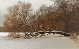 Apenas corteza en un árbol Superficie estructural hermosa de la corteza en diversos árboles Fotos de archivo libres de regalías