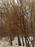 Apenas corteza en un árbol Superficie estructural hermosa de la corteza en diversos árboles Fotografía de archivo