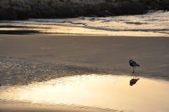 Apenas dos de nosotros pájaro de mar Foto de archivo libre de regalías